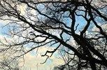 VG_850_0904_10-04-2021_on1_landscape.jpg