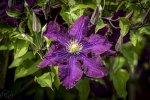 Garten.Zenith-Helios-44-4 2_8-1-1000.jpg