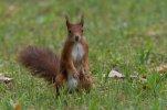 Eichhörnchen_001.jpg
