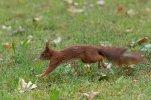 Eichhörnchen_002.jpg