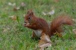 Eichhörnchen_003.jpg