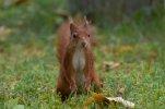 Eichhörnchen_004.jpg