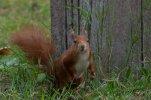 Eichhörnchen_005.jpg