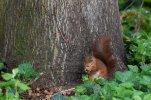 Eichhörnchen_008.jpg
