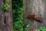 Eichhörnchen_009.jpg