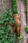 Eichhörnchen_010.jpg