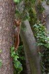 Eichhörnchen_011.jpg
