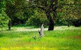 VG_500_6591_on1_landscape.jpg